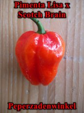 Pimenta Lisa x Scotch Brain